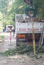 Rimossi gli alberi caduti nel Cormor